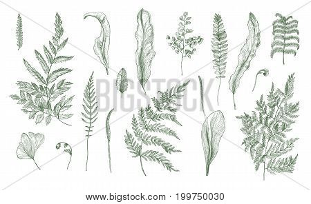 Fern realistic collection. Hand drawn sprouts, frond, leaves and stems set. Black and white vector illustration