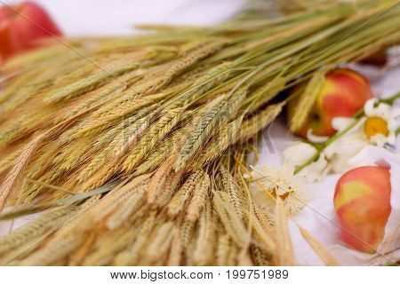 The harvest of wheat, ears of wheat. Crop holiday