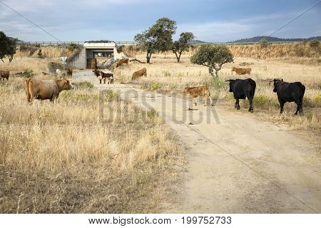 herd of cows grazing in the countryside on a summer day