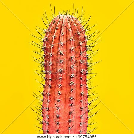 Cactus. Art Gallery Fashion Design. Minimal. Pink cactus, Trendy Colors. Creative Style. Fashion Concept on Yellow background