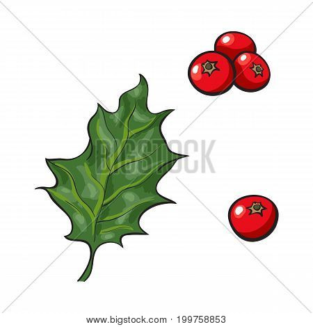 Mistletoe leave and red berries, holly berry, Christmas decoration element, sketch vector illustration on white background. Green mistletoe leaf and red berries, Xmas decoration