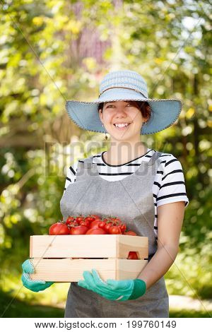 Photo of woman in hat with box of tomato in garden