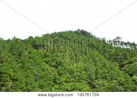 Closeup Forest Mountain Hill Tip Isolated On White