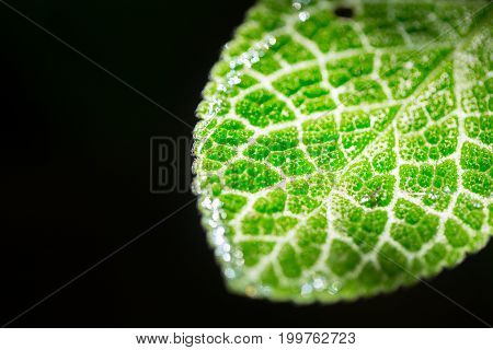 Closeup Green Leaf Micro Texture Isolated On Black. Science Of Nature Plant Life.
