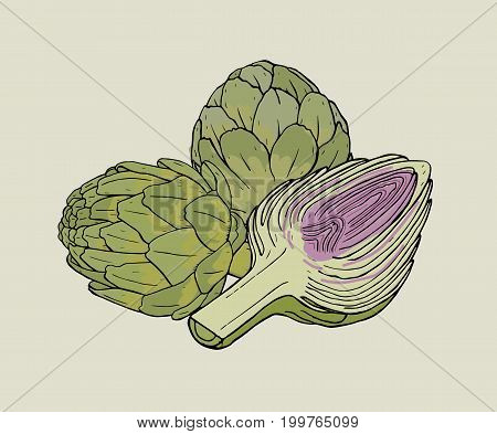 Artichoke hand drawn isolated composition with whole and cutaway plant. Colorful vector illustration