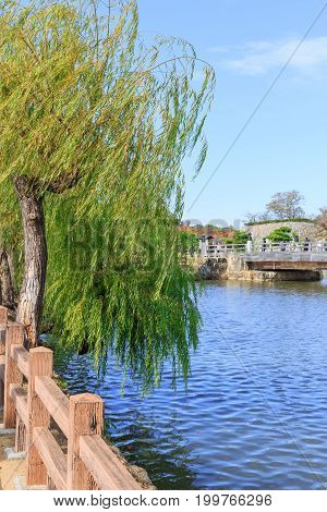 Weeping Willow Tree With The River, Japan Street Bridge Front Of Himeji Castle.