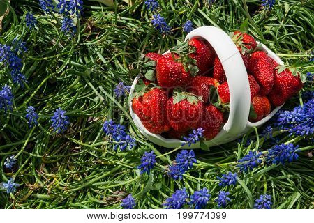 Fresh strawberries in a ceramic basket on green grass whith a blue flovers