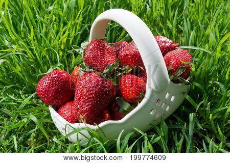 Fresh strawberries in a ceramic basket on green grass