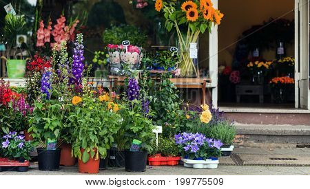 flowers outoor