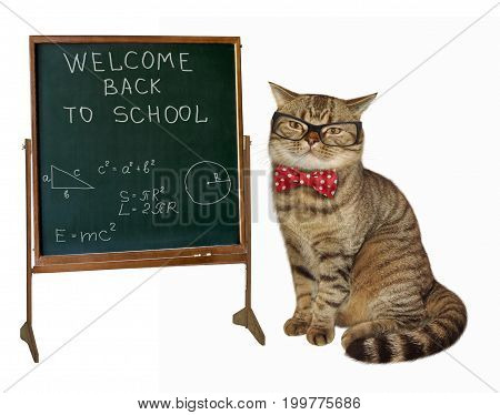 The cat teacher with glasses and a bow tie is sitting next to a blackboard. White background.