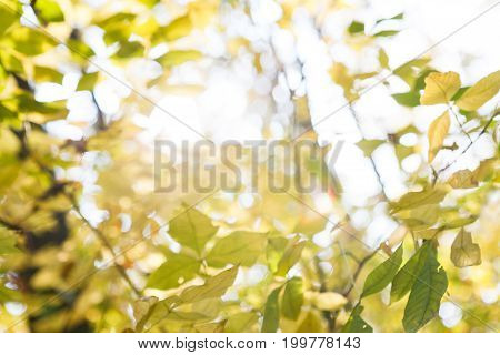 Autumn leaves and sky blurred background. Fall season trees with green foliage bokeh, forest in nature.