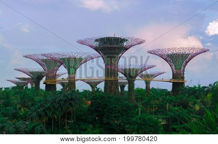 SINGAPORE - MARCH 29 2017: The Supertree Grove the symbol of Gardens by the bay.