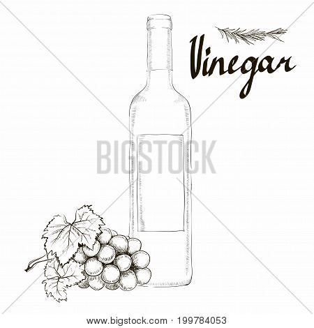 Wine vinegar in the bottle vector, outline. bunch of grapes Hands painted