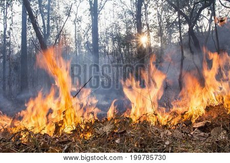 bush fire destroy tropical forest in northern Thailand