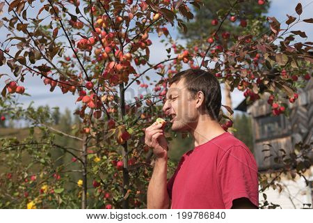 Portrait of a young man eating a small red apple outdoors on a sunny day against an apple rennet tree. The sunshine is strong, the shadows are deep.