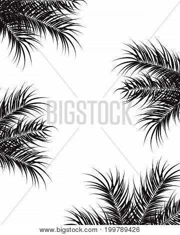 Tropical design with black palm leaves and plants on white background vector illustration