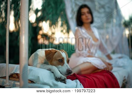 Young woman in lacy peignoir sits with dog on bed with bedding and baldachin near tree. Concept of rest relaxation and serenity.
