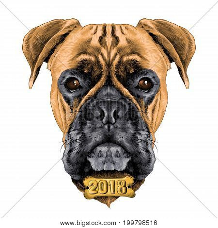 the head of the dog breed boxer dog collar c a vector sketch graphics colored drawing with the collar bone the new year