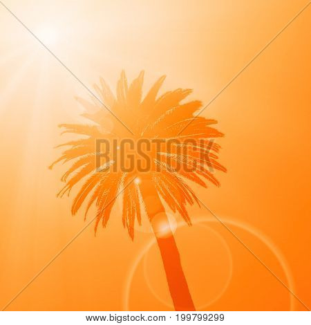 Silhouette of the crown of the tropical palm tree on the orange background