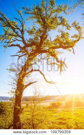 Chilean nature during sunset with tree on the foreground near Valdivia