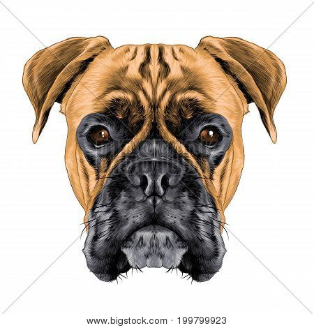 the head of the dog breed boxer dog collar c a vector sketch graphics colored drawing