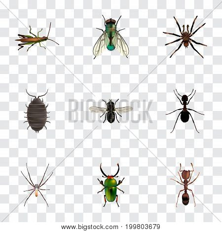 Realistic Dor, Emmet, Ant And Other Vector Elements