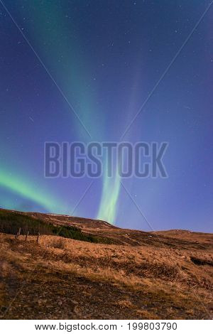 Aurora borealis in the starry night of Iceland, vertical shot.