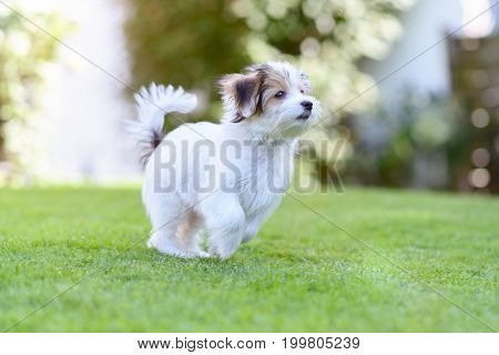 Playful Puppy Running In Vibrant Summer Park