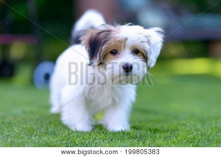 Adorable, Curious Puppy Playing On Green Grass