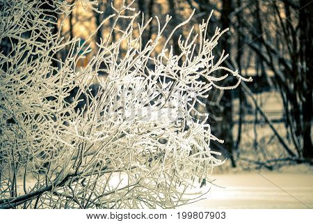Photo of winter morning with trees in frost