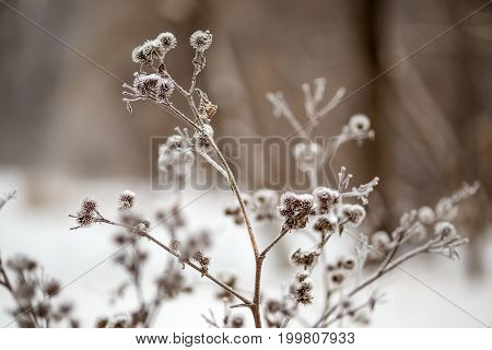 Image of winter morning with dry plant in frost