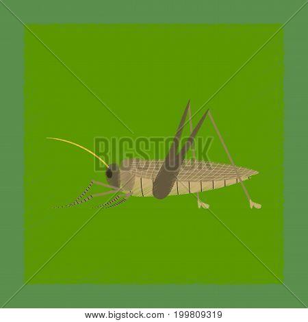 flat shading style illustration of grasshopper natural