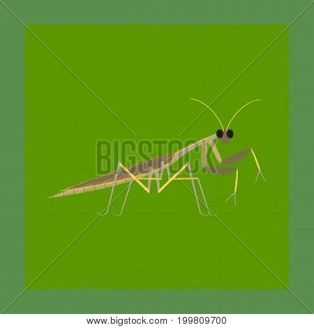 flat shading style illustration of Mantis natural