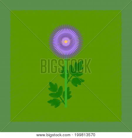 flat shading style illustration of flower chrysanthemum