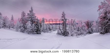 Panorama of sunset in a winter forest in a clearing with the ski trail. South Ural