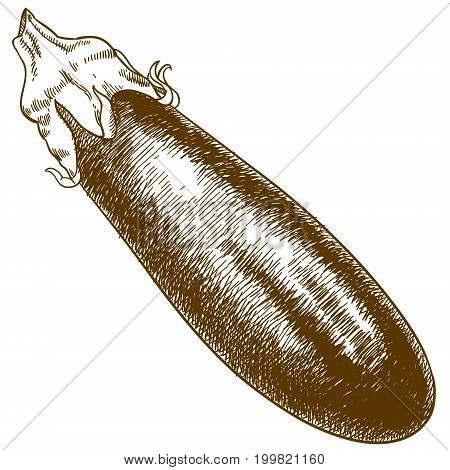 Vector antique engraving illustration of eggplant isolated on white background