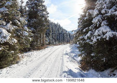 Wintery Snowy Path With Trees In Stubai Alps Mountains, Austria