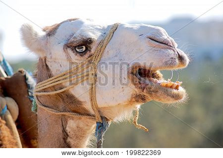 brown and white camel head close up photo