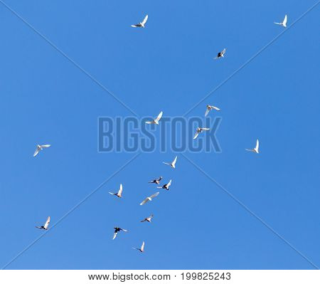 A flock of pigeons on a blue sky .