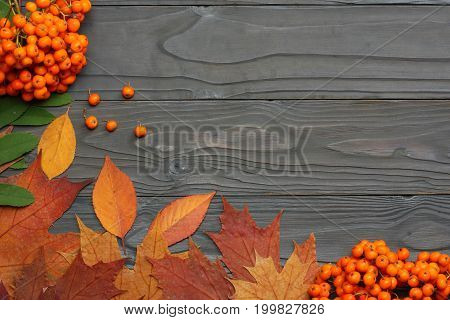 autumn background with colored leaves and rowan on wooden board. top view with copy space