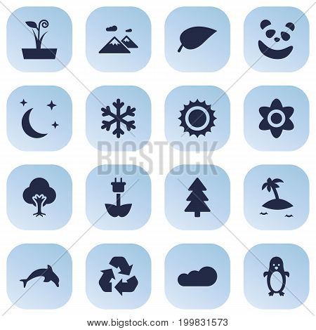 Collection Of Foliage, Solar, Spruce And Other Elements.  Set Of 16 Natural Icons Set.
