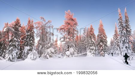 Panoramic View Of Sunset In The Snowy Forest, With Skiers And Tourists On The Ski Run