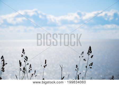 Backlit grass straws silhouettes by bright blue water with sun reflections