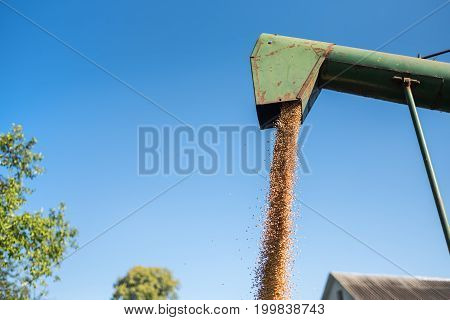 The harvester pours wheat into a sheet it is time to harvest wheat Ukraine
