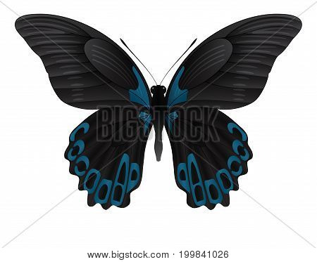 Beautiful butterfly isolated on a white background. Rumanzovia scarlet Mormon butterfly. 3D illustration
