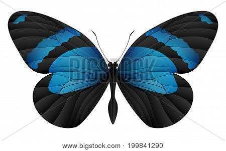 Beautiful butterfly isolated on a white background. Callicore cynosura butterfly. 3D illustration