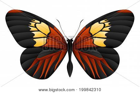 Beautiful butterfly isolated on a white background. Longwings or heliconians butterfly. 3D illustration