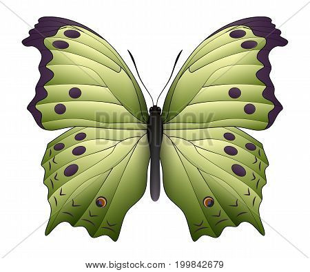 Beautiful butterfly isolated on a white background. Salamis or mother of pearls butterfly. 3D illustration