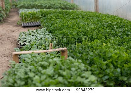 Seedlings Of Small Vegetables