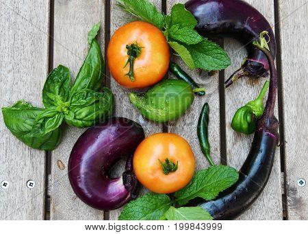 Freshly harvested vegetables of Brinjal or Eggplant tomatoesand herbs like mint basil rosemary